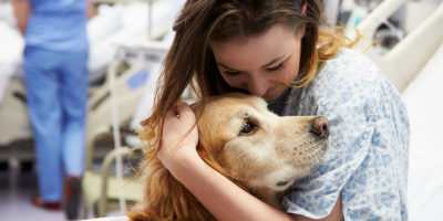 pet-therapy-ferplast